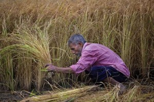 farmer_harvest20150916.jpg.ashx