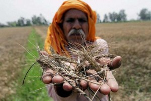 wheat_rain20150421.jpg.ashx
