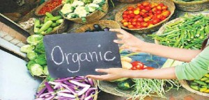 7477_Organic-farming-gaining-pop
