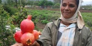 Farmstory-farmer