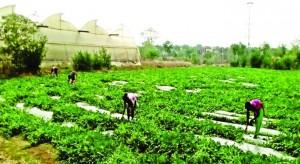 Organic-farming-in-Sarjamda-690x377