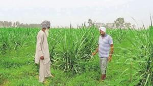 jalandhar-village-charkey-amarjeet-village-bhogpur-monday_bfb0c29c-4297-11e6-b0f4-7520104944f6